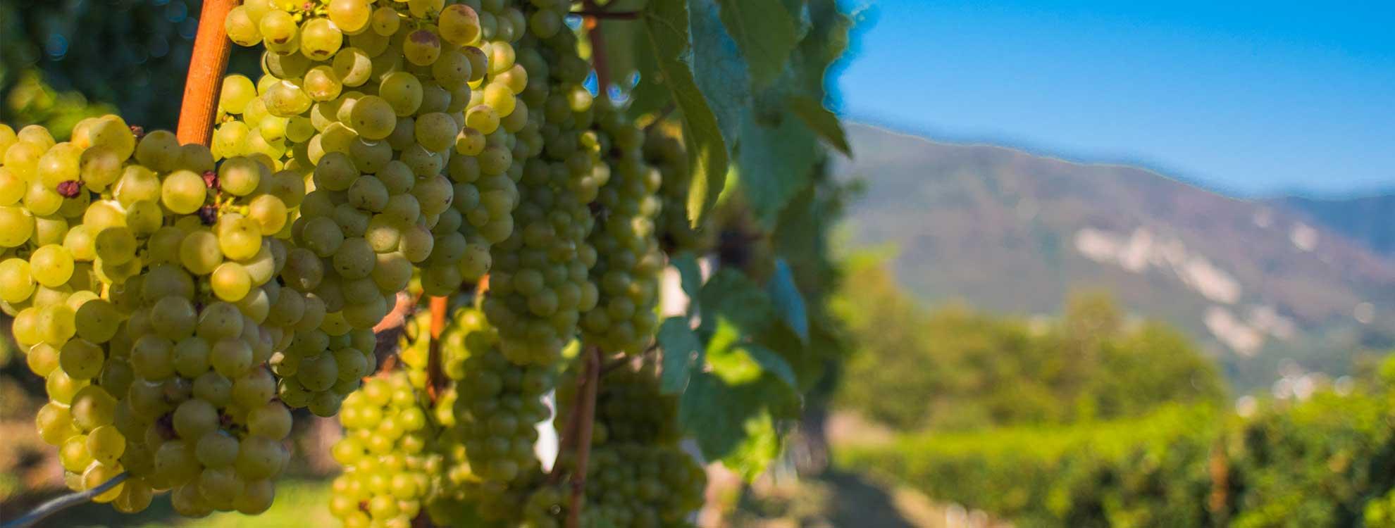 vino della rassegna gastronomica del mendrisiotto